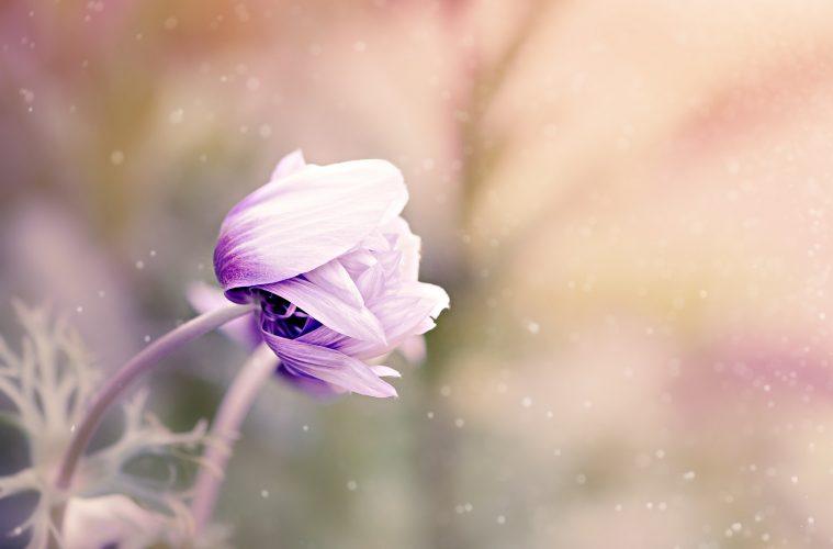cennet ve cehennem sonsuzdur